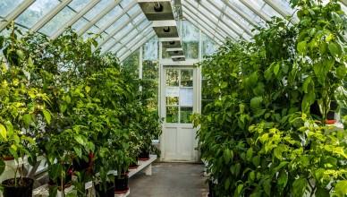 greenhouse-454510_960_720